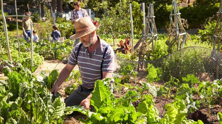Ibiza Food Bank - Support an Ibiza farmer